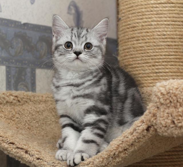 Даниэль котенок